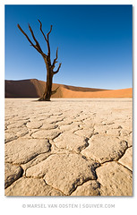 Drought (Marsel van Oosten) Tags: africa landscape wildlife trips tours namibia workshops phototrips fineartprints photoworkshops phototours marselvanoosten squiver namibiauntamed