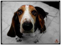 El Perro, fiel amigo / The Dog, Faithful by Foxspain Fotografía, on Flickr