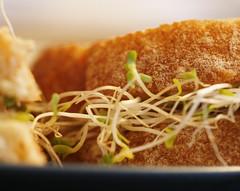 Mmmm Alfalfa Sprouts