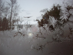 bird-flight foggy day (Nelley) Tags: bird ice nature fog frost