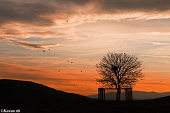 Cry out for liberty (kavan.) Tags: sunset red sky cloud hot tree bird nature silhouette yellow canon fence landscape liberty freedom fly flying iran horizon free sigma iranian captive 1770 kurdistan sanandaj kavan kordestan 400d