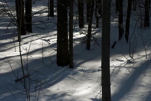 Paillettes sur la neige