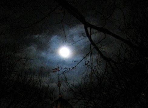Fullmåne i skogen. Foto: Merete Veian / Flickr.com