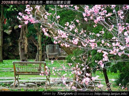 2009陽明山花季@台北市.陽明山國家公園