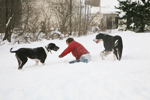 snow day with the dogs