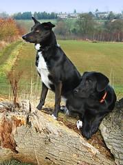 Ellie and Barney II