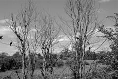 Cуздаль (primorskaya) Tags: sky church landscape crow suzdal небо церковь пейзаж купол суздаль вороны