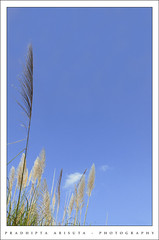Up and down (juzz_arisuta) Tags: sky bali nature canon bluesky alam rumput 50d alambebas