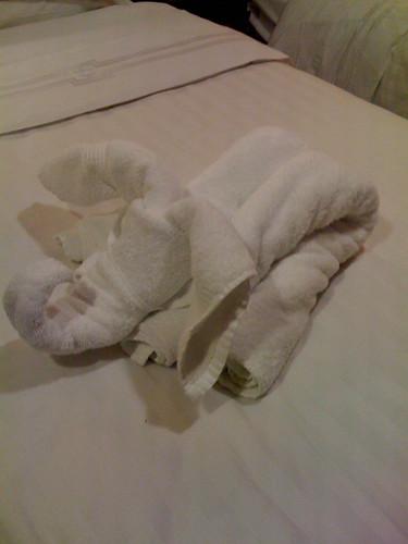 Cruise Elephant