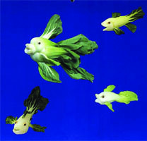 vege fish