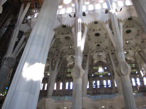 Forest of Sagrada Familia
