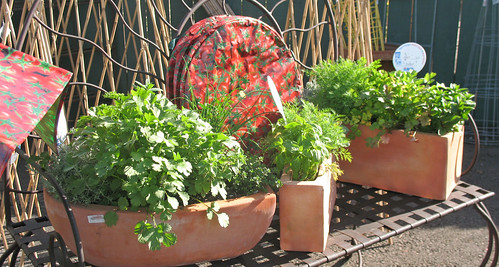 herbs in pots, edible garden