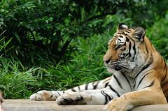Tama Zoo Life