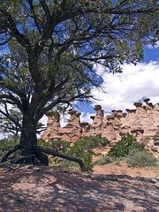 erosion (CaZen) Tags: trees sky newmexico southwest west nature clouds america landscape rocks redrocks badlands navajo canyons hoodoos