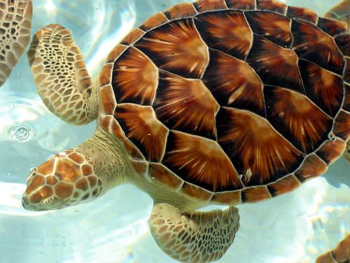 Xcaret Yucatan Peninsula Mexico Turtles