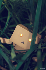 Caught In The Grass (Antty+) Tags: grass toys singapore stuck blades annoying irritating danbo danboard danboru antty antontang
