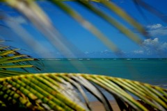 Franjas do mar II (Fabiana Velso) Tags: verde folhas sol praia gua mar areia vento coqueiro oceano azil duetos fabianavelso bemflickrbembrasil