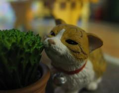 Fresh1 (annesstuff) Tags: cat miniature catnip rement dollhouse 16scale dollhouseminiature annesstuff
