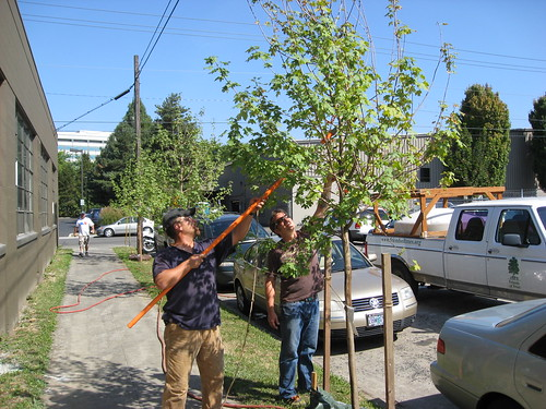 Summer watering: Neighborhood Trees