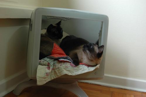 cama monitor por monicaewagner.