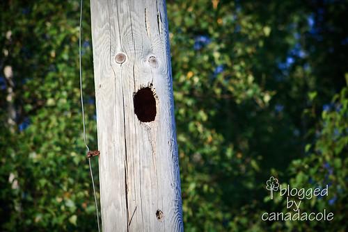 pecked pole