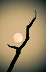 Moon (sepia)