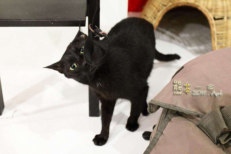 貓館|台北待認養貓。貓住宿。貓旅館