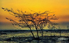 !!    ..   (- M7D . S h R a T y) Tags: sunset tree     wordbyme allrightsreserved