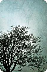 Naked Tree (jami_lee) Tags: light sky tree texture cheese branches plain baretree needmotivation yayforschool