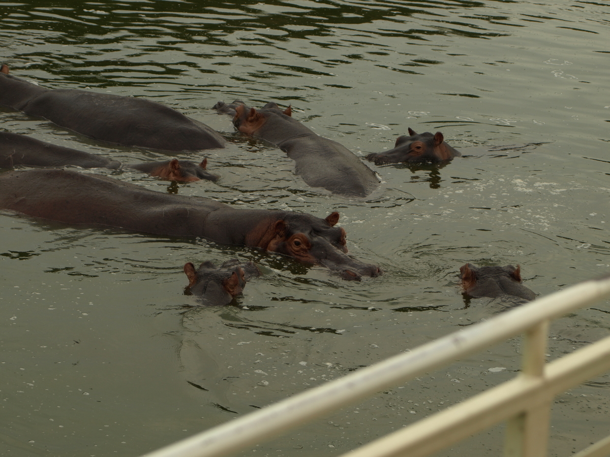 Approaching Hippos toward the Launch