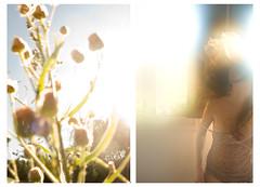 (maRin) Tags: color luz ventana mujer flor movimiento campo habitacin da sueo ocre accin
