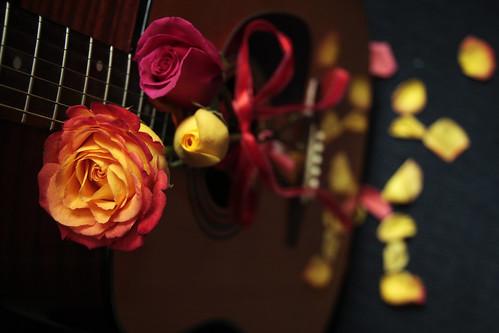 Roses 31
