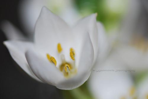 Namaste (...in white)
