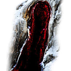 Cave of Revelation Dream (josef...) Tags: alberta banff soe treestump bowriver sobeautiful cherryontop bej fineartphotos platinumphoto artandphotography ysplix proudshopper goldstaraward rubyphotographer awardtree miasbest musicsbest visionqualitygroup artofatmosphere