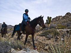 ride82 (Bryce Bradford) Tags: snow tree ride joshua scenic olympus valley mojave dome february endurance eastern zuiko 2009 horseback cima 70300 e500 1442