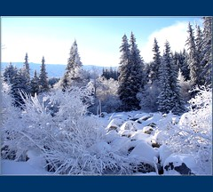 Magic Forest 3 and Stone River (Stella VM) Tags: blue winter sky white mountain snow tree beauty stone bulgaria spruce beautful vitosha