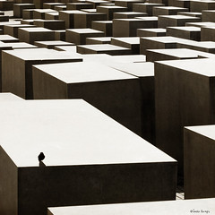 Forest of Cubes (moggierocket) Tags: city light berlin bird art contrast square landscape concrete holocaust shadows maze cubes remembrance holocaustmemorial labyrinth vast 500x500 winner500 hourofthesoul