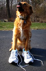 they're mine now... (:k:) Tags: dog pet tongue canon puppy adorable sneakers thief sasha stealing sx100