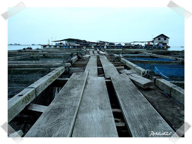 fish-farm-3