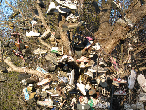 Beaverton Shoe Tree (2)