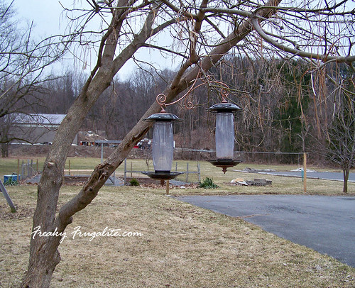 Empty Feeders