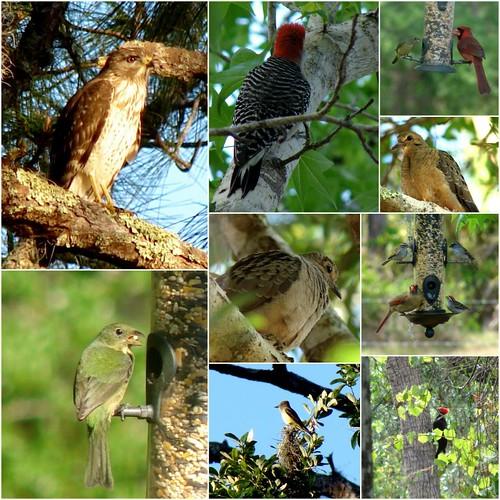 Bird Sanctuary on Pollywog Creek