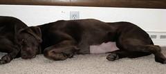 Dakota Resting