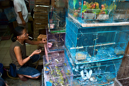 Yuen Po Street Bird Garden 04