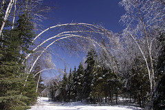 Crystal Arbour (KarenR-TB) Tags: trees ice minnesota icestorm naturesfinest mountjosephine absolutelystunningscapes