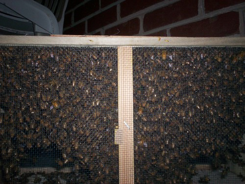 our bees clustering in the shipping box