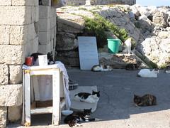 RHODES - Filantropica (Andra MB) Tags: cats chats greece grecia griechenland rodos rhodes 2009 katzen begging kedi beggary pisici kediler cerşit yuanistan cerşetorie