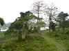 Kaziranga - View from rangers' observation tower (jcdl.) Tags: india assam kaziranga