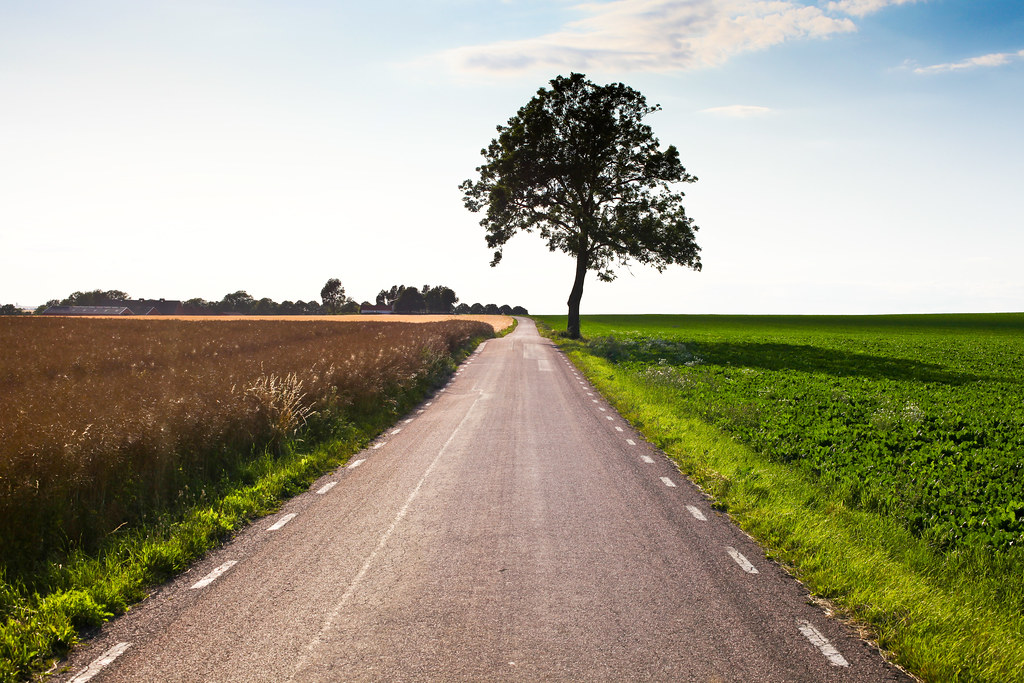 Lonely road, lonely tree