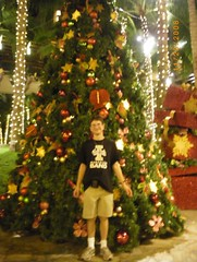 O Christmas Tree (Designer Michael) Tags: christmas stars island hawaii holidays oahu christmastree christmaslights christmasdecorations christmaspresents holidayseason holidayspirit christmasspirit hawaiianvacation christmasstars holidaycheer christmasinhawaii islandvacation christmasinparadise christmaswaikiki holidayseasonhawaii